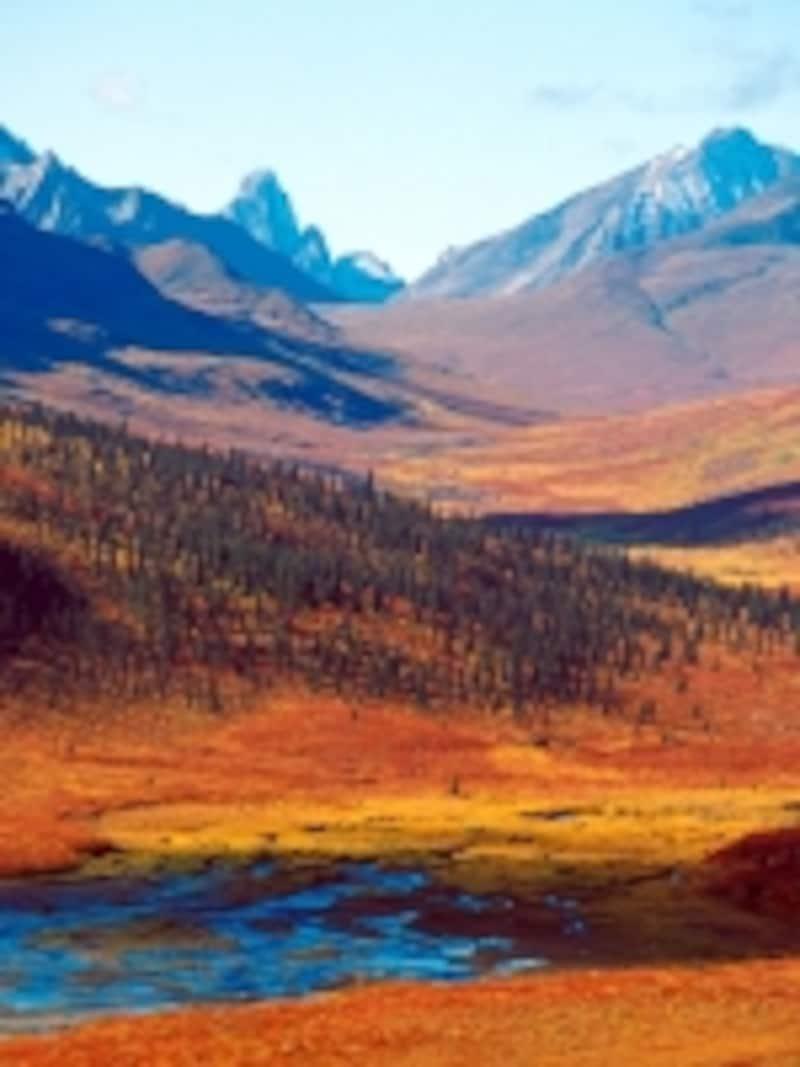 ホワイトホースから北へ進むと見られるツンドラの紅葉undefined(C)TourismYukon