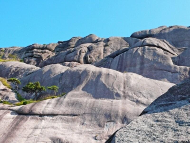 滑らかの岩肌と黄山松