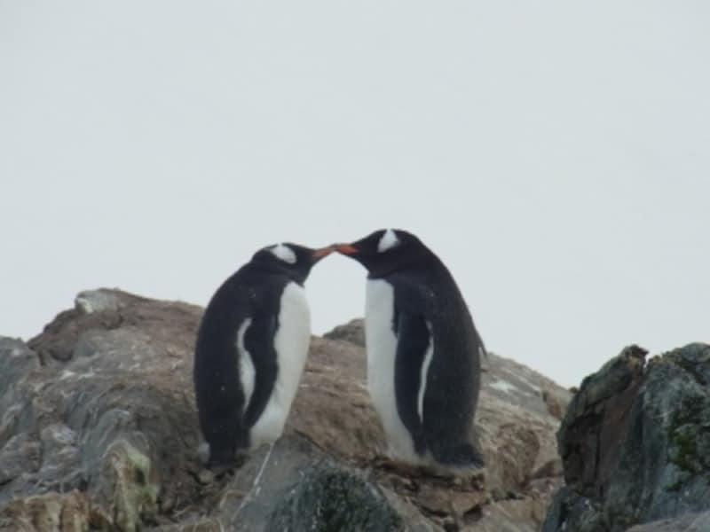 南極ではペンギンの愛らしい姿に出会うことが出来るundefined写真提供:岡部能直