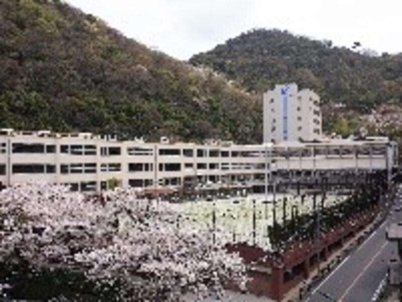 100年以上の歴史を誇り、山々に囲まれまさに風光明媚な鶯谷中学校。春には桜も眺められ、四季の移り変わりを実感できる。