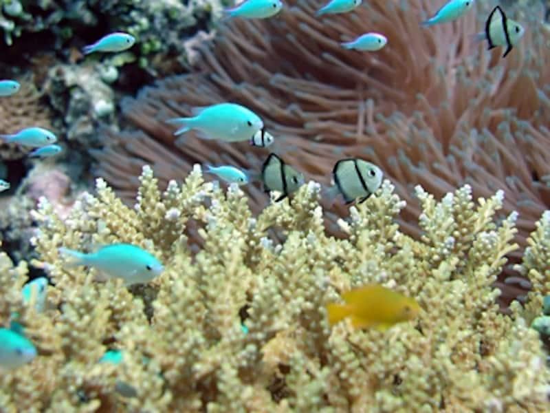 色も形も美しい海水魚たち。海水を維持するためにはその分機材も必要になる。