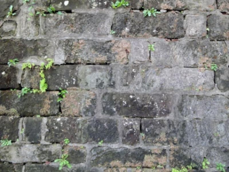 劣化の進んだ擁壁