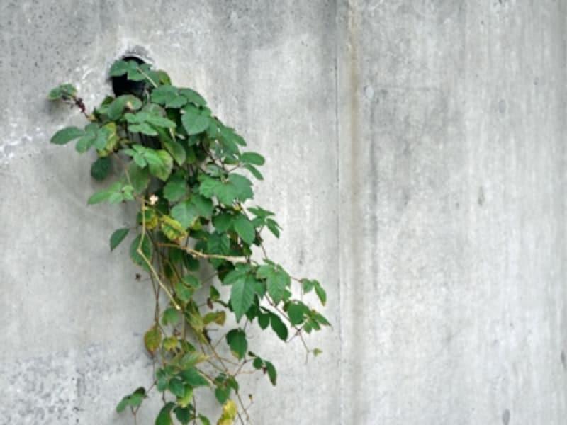 擁壁の水抜き穴から生えた草木