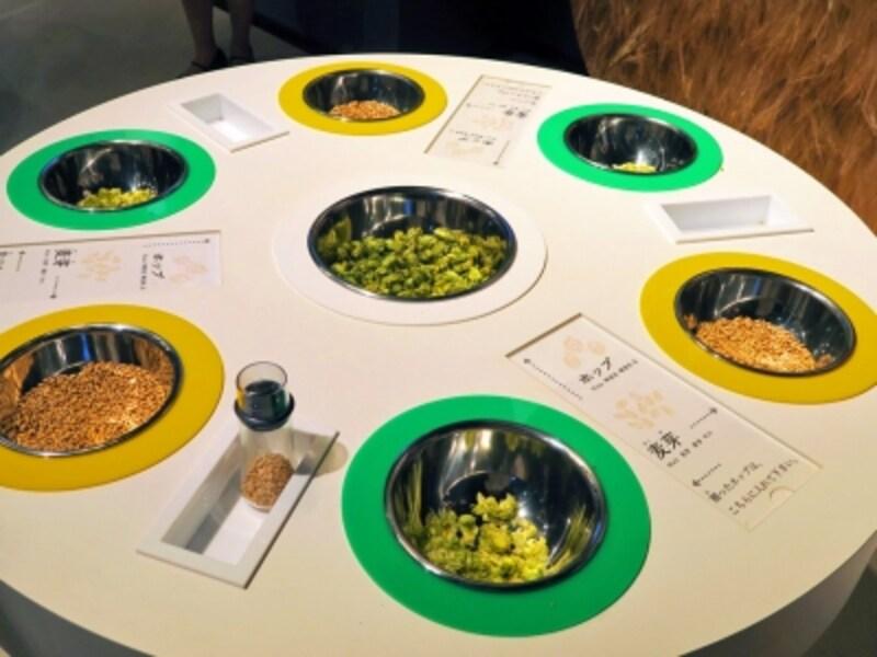 普段あまり見ることのないビールの原材料(ホップ、麦)に触れることができるのも工場見学ならではの体験(2016年9月28日撮影)