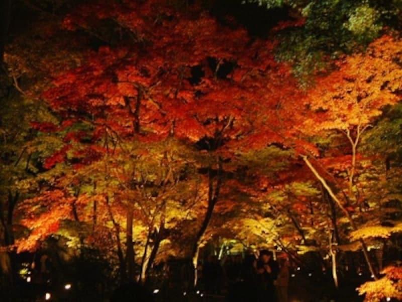 宝厳院・獅子吼の庭の紅葉ライトアップ