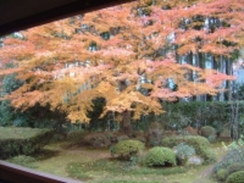 大原・宝泉院の紅葉