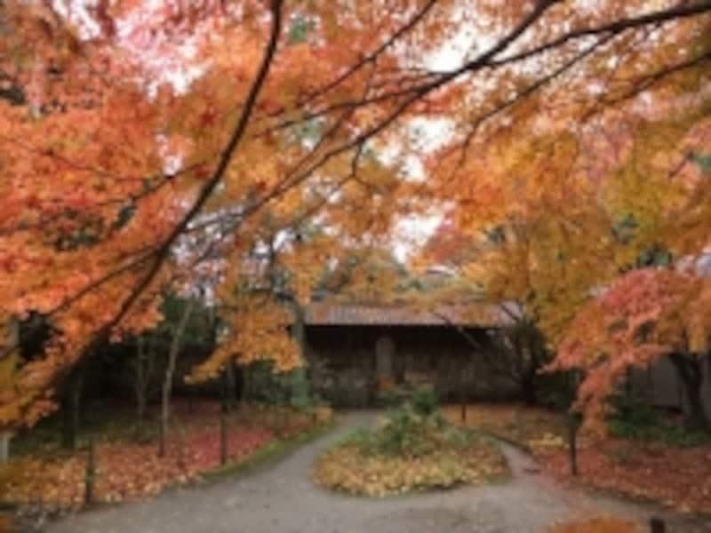 蓮華寺の紅葉(1)