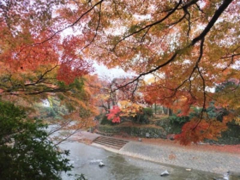 八瀬比叡山口駅の近く、高野川を彩る紅葉(2012年11月23日撮影)