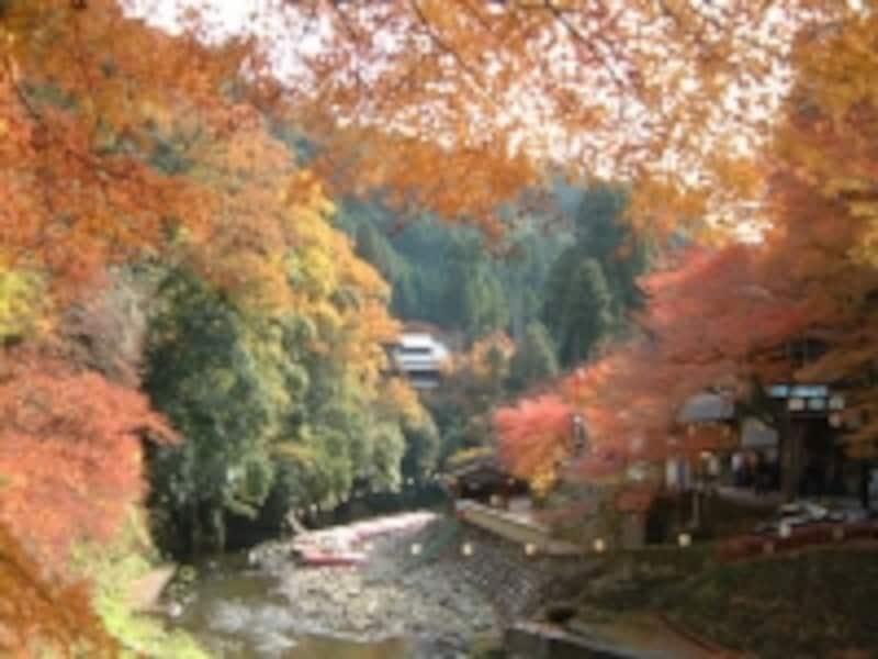 高雄橋のたもとから眺める紅葉