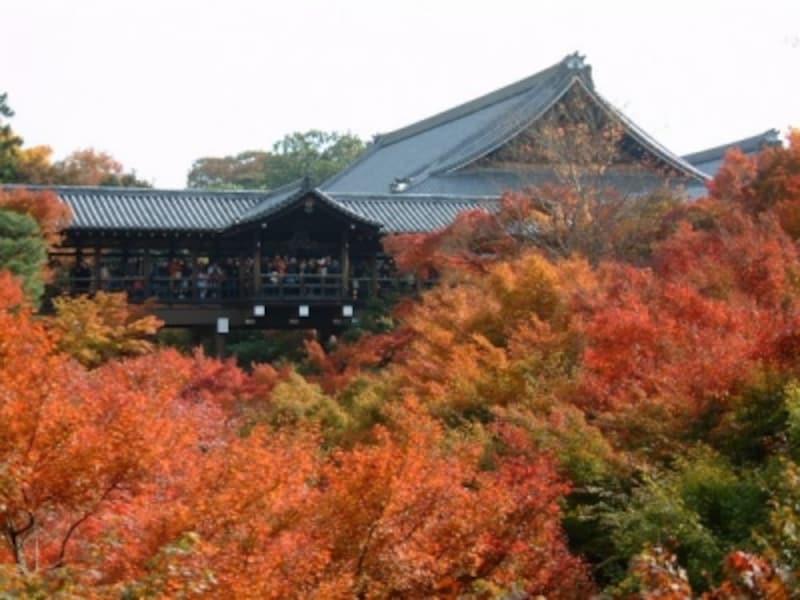 東福寺の紅葉(1)