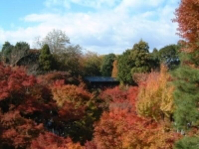 東福寺の紅葉(2)