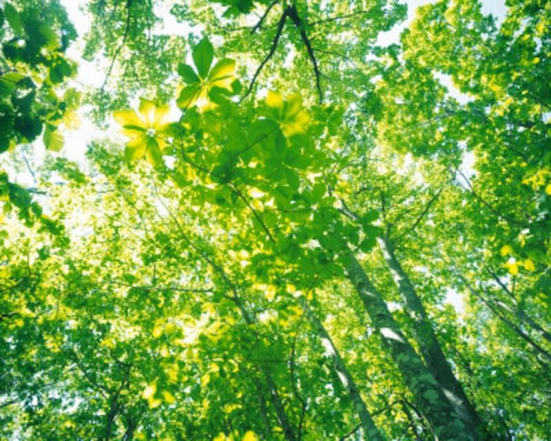 私たちの呼吸している空気に含まれる酸素、太陽光に含まれる紫外線にも「漂白」力があるのです