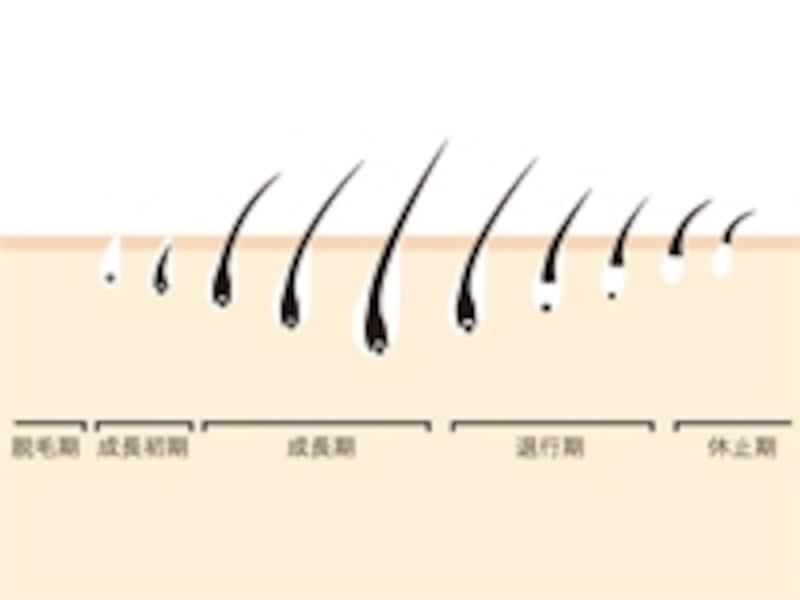 まつげ毛周期