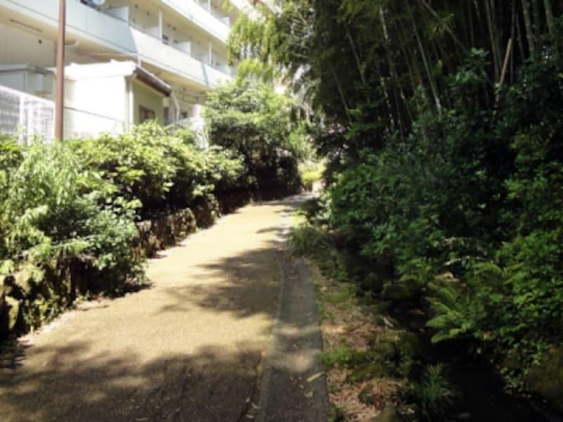 住宅地の遊歩道