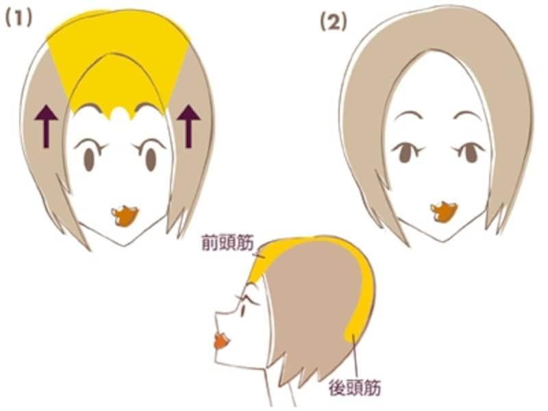 イラストの黄色い部分が前頭筋・後頭筋です