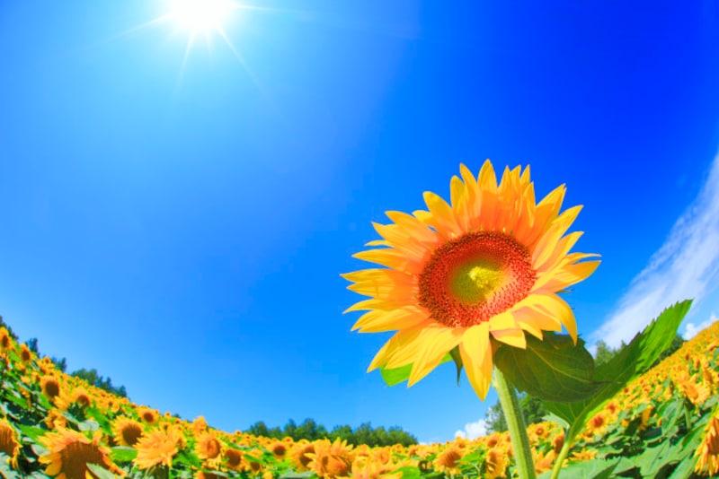 季節は太陽の動きに影響するので、太陽に基づく二十四節気と新暦は相性がいい