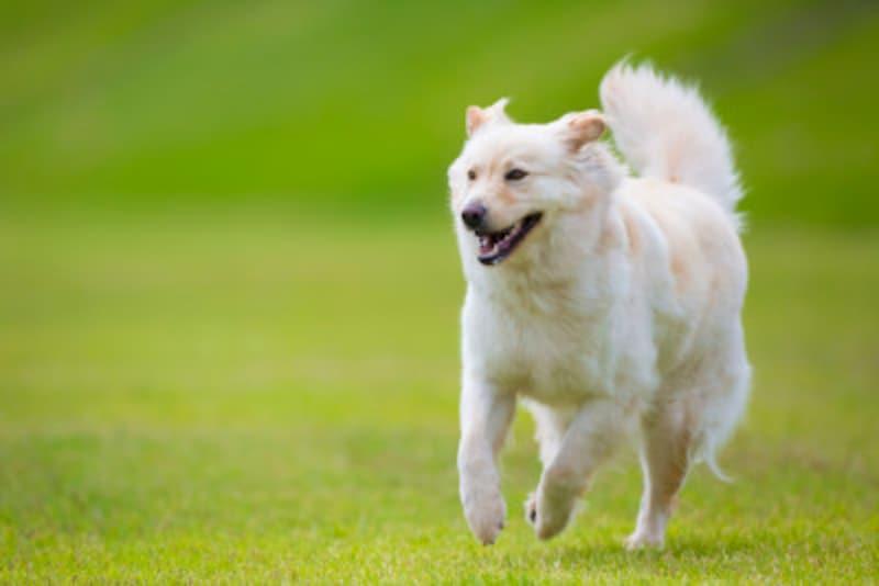 犬の用語を解説!