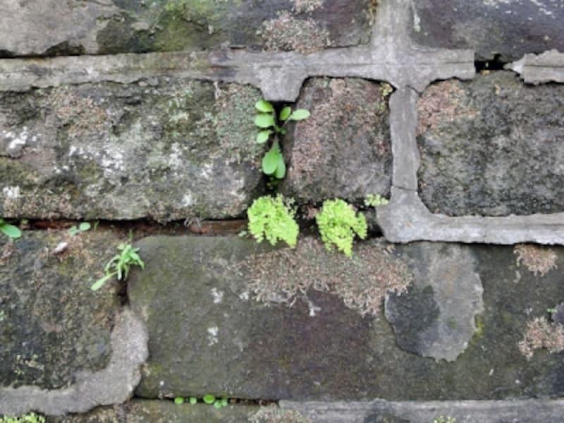 表面的な補修がされた擁壁