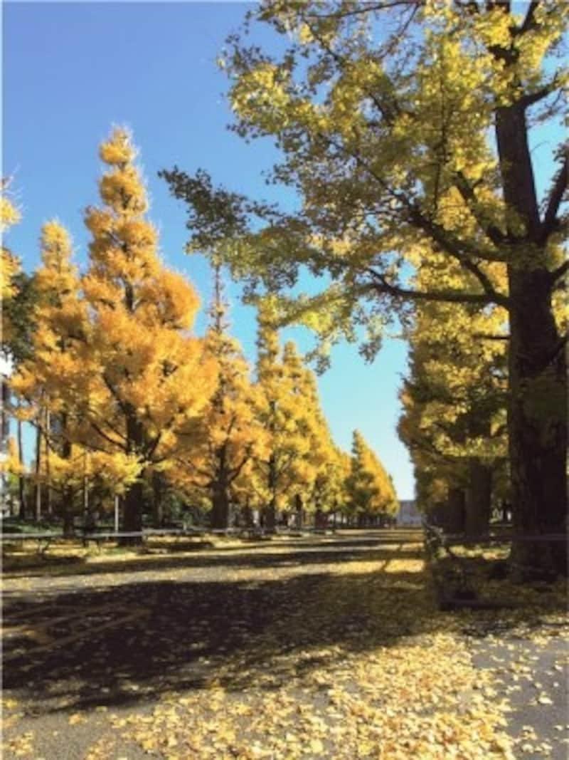 慶應義塾大学日吉キャンパス(現地より約540m)※平成23年11月撮影