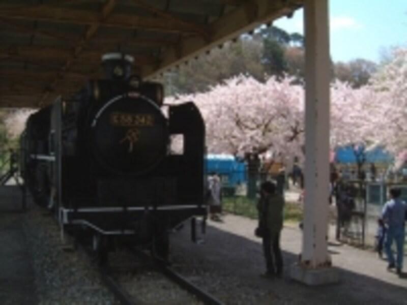 展勝地に静態保存されている蒸気機関車C58-342号機と桜