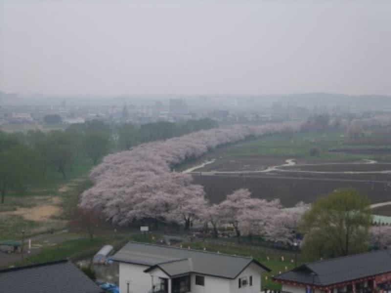 陣ヶ丘から眺める北上展勝地の桜並木