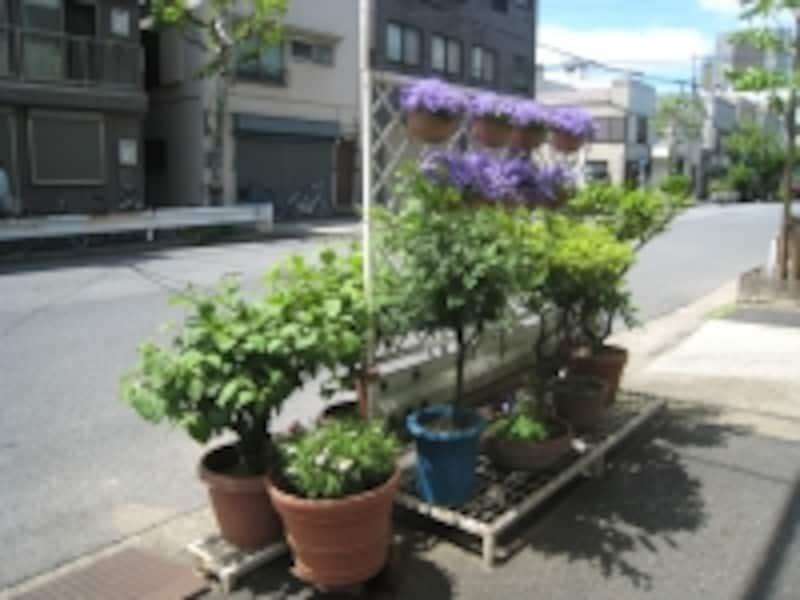 街中の植栽