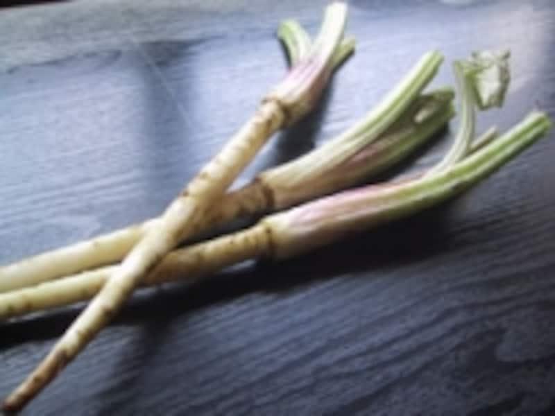 野菜,果物,キノコ,海藻,食物繊維