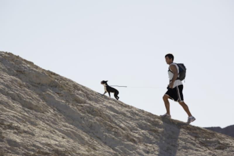 愛犬連れでの旅