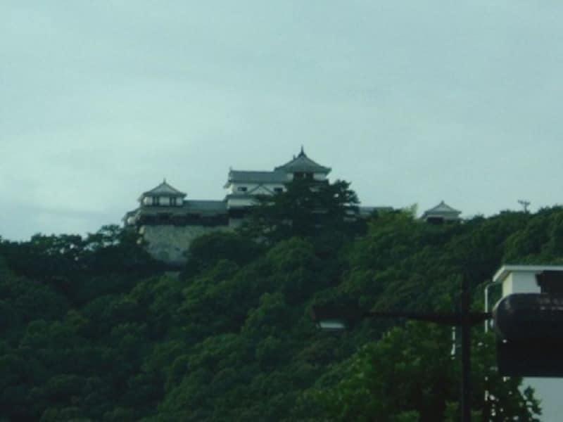 松山城(1)/松山市役所前より