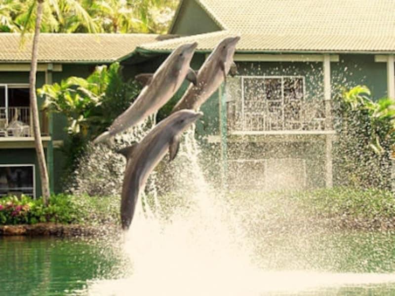 中庭のラグーンで泳ぐイルカたち。彼らとふれあえるプログラムを毎日開催