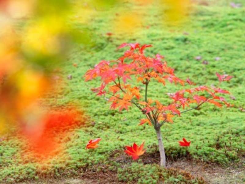 日本庭園の植物