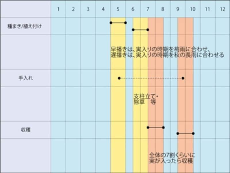 エダマメの栽培スケジュール