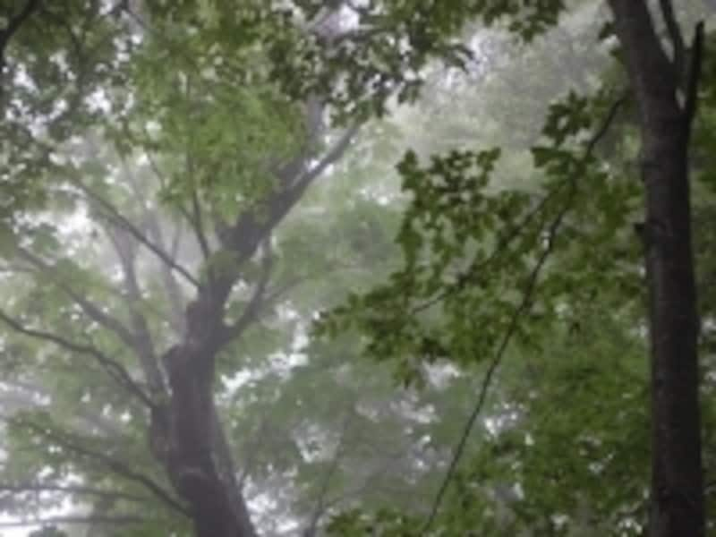 このような、霧に包まれた神秘的な世界も青森の自然が織り成す技です