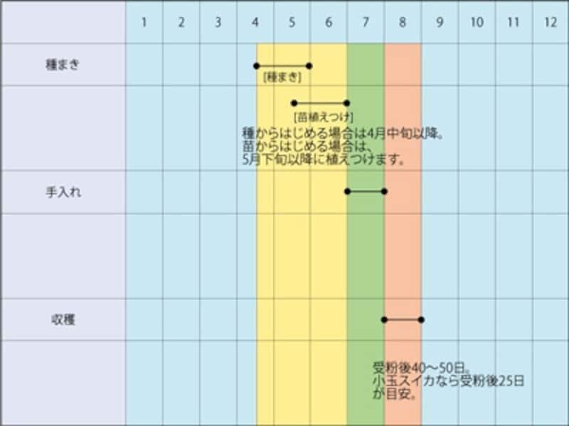 スイカの栽培スケジュール