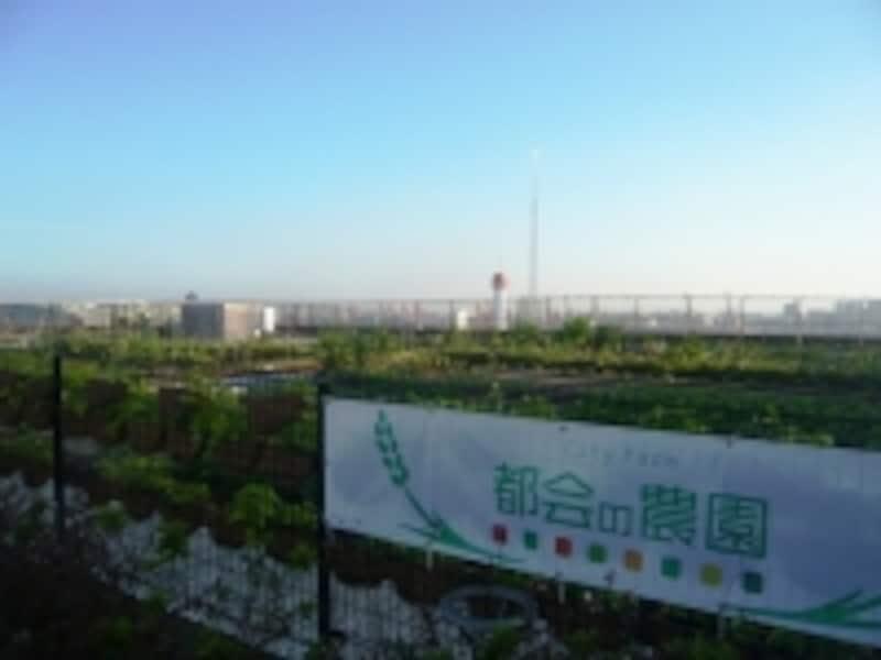 農園の向こうに広がる東京ベイエリア
