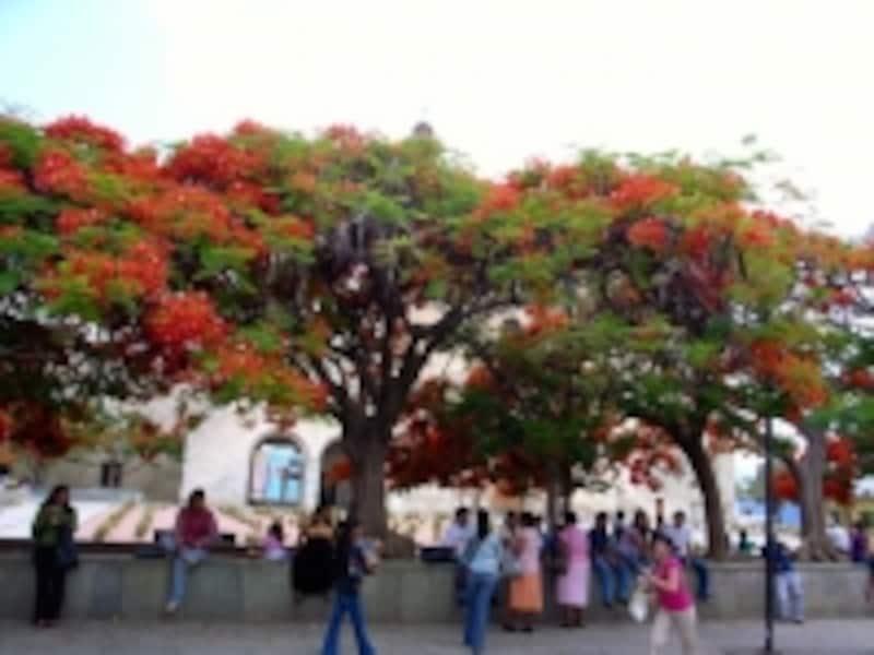 plazasantodomingo