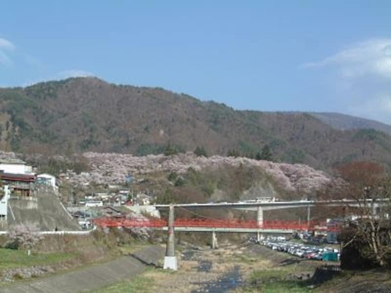 小高い丘の上にある高遠城址公園を包み込む桜。遠くから見ても圧巻です!(2005年4月17日撮影)