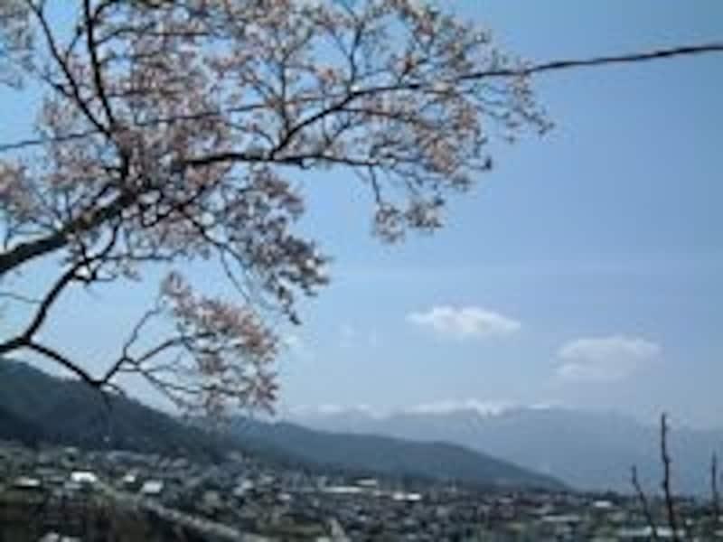 高遠城址公園に向かう坂道の途中で見える桜と中央アルプスの山々(2005年4月17日撮影)