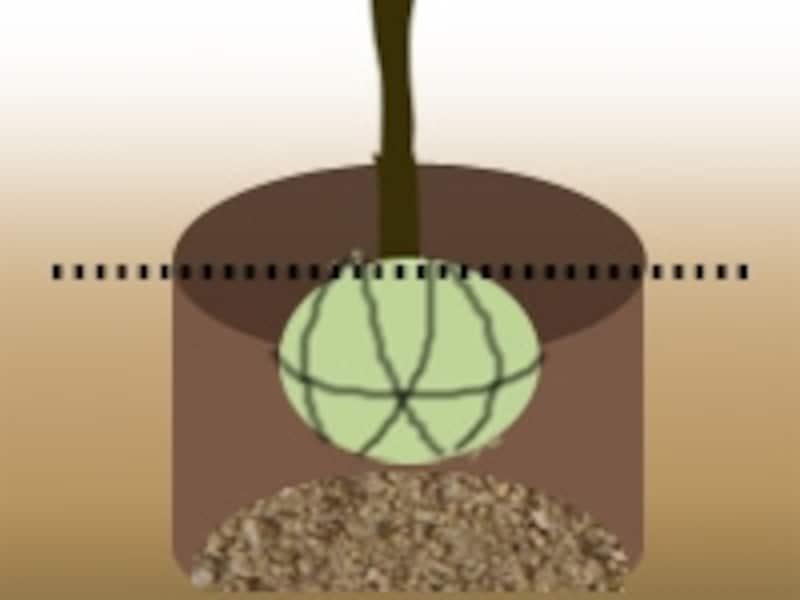 植え込みの際、埋め戻す土には腐葉土や堆肥などをすき込んでおこう