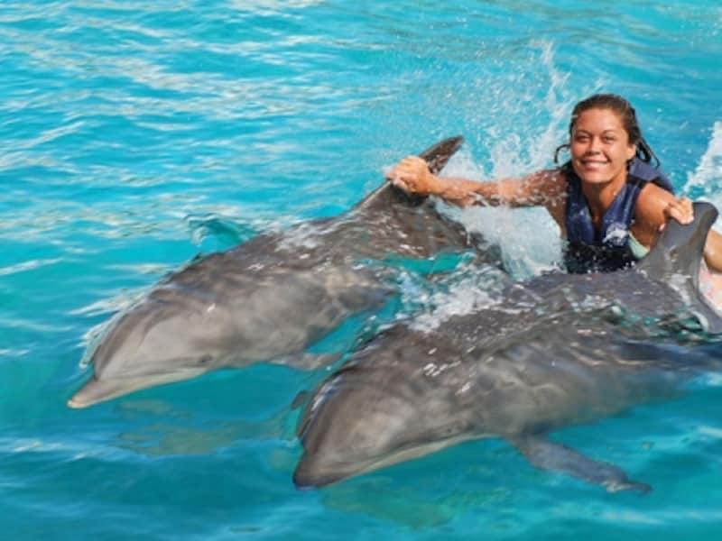 イルカの背びれにつかまって泳ぐエキサイティングなプログラム「ドルフィン・ロイヤル・スイム」。ウォルフィンが登場する回もある