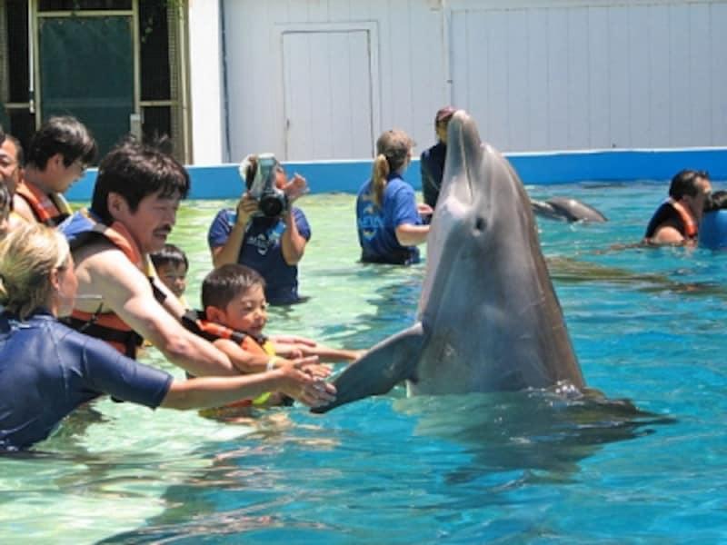 イルカに握手やタッチ&キスができる体験プログラム「ドルフィン・エンカウンター」