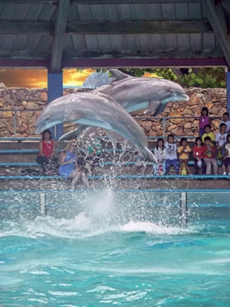 イルカ、アシカ、ペンギンとスター勢ぞろいの「ハワイアン・オーシャン・シアター・ショー」