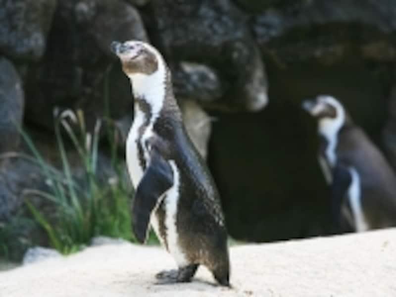 トレーラーからペンギンの生態について話を聞くこともできる