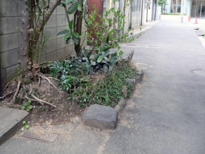 セットバック部分の植栽