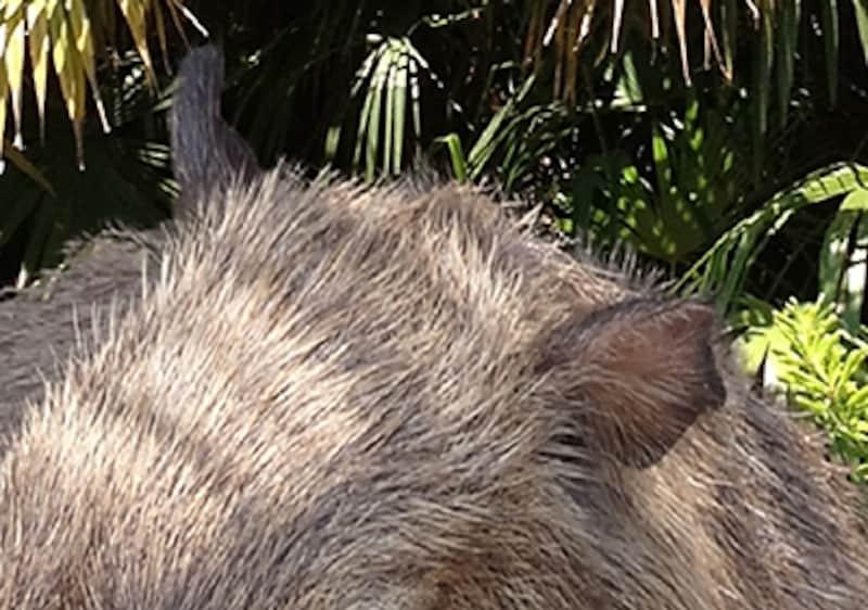 ほかの写真に合成した例。毛と背景が自然に重なって見えている。