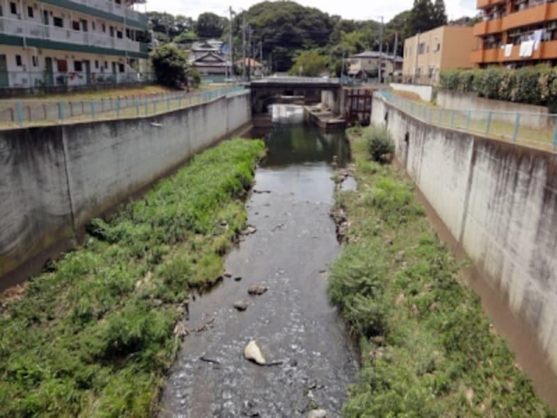 雑草が生い茂った川