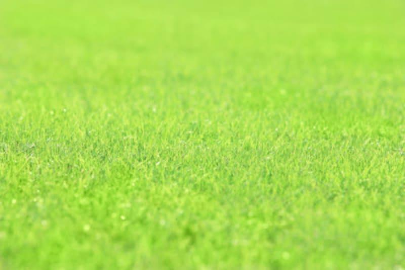 芝生の手入れ道具