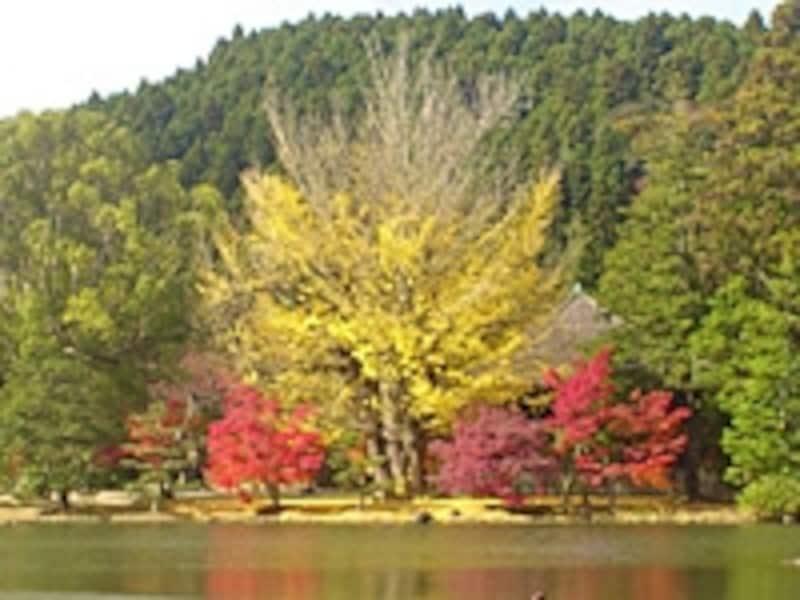 浄土式庭園の美しい紅葉