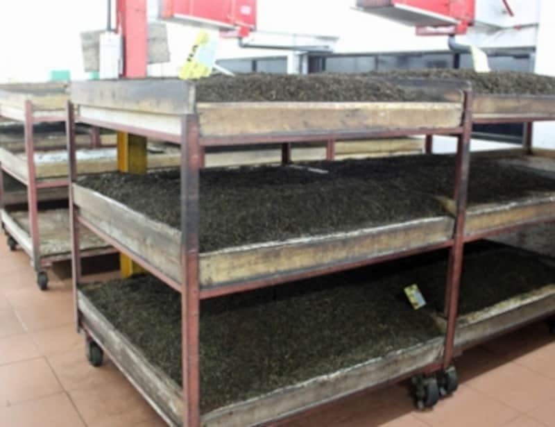 高温、多湿の発酵室