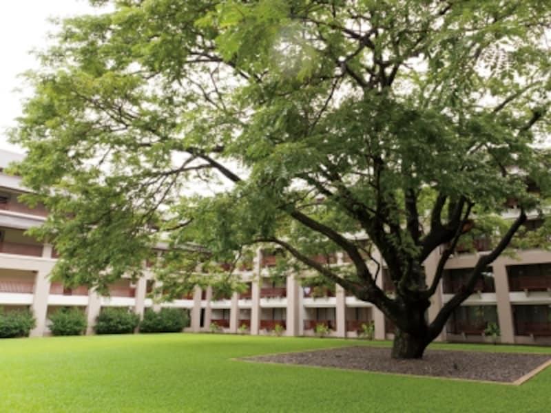 樹齢100年の巨木、洗練された景観が印象的。